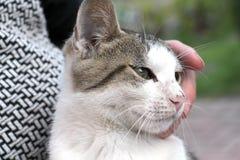 Χαριτωμένο περιπλανώμενο γατάκι χέρια Στοκ Εικόνες