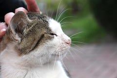 Χαριτωμένο περιπλανώμενο γατάκι χέρια Στοκ Φωτογραφίες