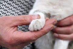 Χαριτωμένο περιπλανώμενο γατάκι χέρια Στοκ φωτογραφία με δικαίωμα ελεύθερης χρήσης