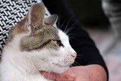 Χαριτωμένο περιπλανώμενο γατάκι χέρια Στοκ φωτογραφίες με δικαίωμα ελεύθερης χρήσης