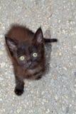 Χαριτωμένο περιπλανώμενο μαύρο γατάκι Στοκ Φωτογραφία
