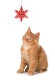 Χαριτωμένο πορτοκαλί παιχνίδι γατακιών με μια διακόσμηση Χριστουγέννων στο λευκό Στοκ Εικόνες
