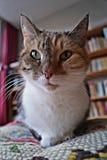 χαριτωμένο πορτρέτο γατών Στοκ Εικόνες