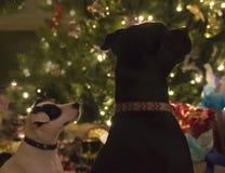 Χαριτωμένο πορτρέτο διακοπών σκυλιών Στοκ Φωτογραφίες