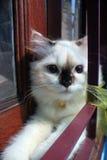 χαριτωμένο πορτρέτο κατοικίδιων ζώων έκφρασης γατών Στοκ φωτογραφία με δικαίωμα ελεύθερης χρήσης