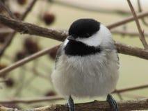 Χαριτωμένο πουλί τραγουδιού σε έναν κλάδο στοκ εικόνα