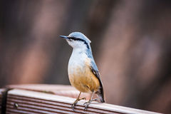 Χαριτωμένο πουλί σε έναν φράκτη στοκ φωτογραφία