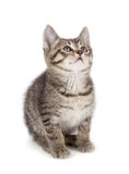 Χαριτωμένο ριγωτό γατάκι σε ένα άσπρο υπόβαθρο. Στοκ φωτογραφία με δικαίωμα ελεύθερης χρήσης