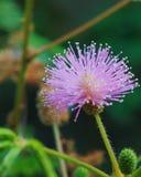 Χαριτωμένο ρόδινο λουλούδι στον κήπο Στοκ εικόνες με δικαίωμα ελεύθερης χρήσης
