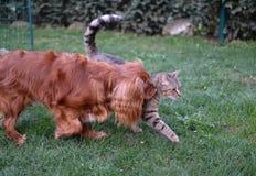 Χαριτωμένο σκυλάκι και τιγρέ γατάκι από κοινού Στοκ Εικόνες