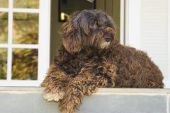 χαριτωμένο σκυλί άγρυπνο Στοκ Φωτογραφία