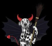 Χαριτωμένο σκυλί αποκριών στο κοστούμι διαβόλων ροπάλων με τη σκούπα - που απομονώνεται στο Μαύρο Στοκ εικόνα με δικαίωμα ελεύθερης χρήσης
