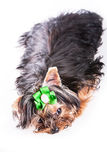 Χαριτωμένο σκυλί κατοικίδιων ζώων   Στοκ φωτογραφίες με δικαίωμα ελεύθερης χρήσης