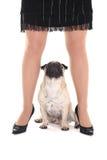 Χαριτωμένο σκυλί μαλαγμένου πηλού και θηλυκά πόδια Στοκ φωτογραφία με δικαίωμα ελεύθερης χρήσης
