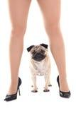 Χαριτωμένο σκυλί μαλαγμένου πηλού και θηλυκά πόδια Στοκ Εικόνες