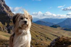 Χαριτωμένο σκυλί με τα βουνά στο υπόβαθρο στο Puez Geisler Nationalpark στις ευρωπαϊκές Άλπεις, Ιταλία στοκ εικόνες με δικαίωμα ελεύθερης χρήσης