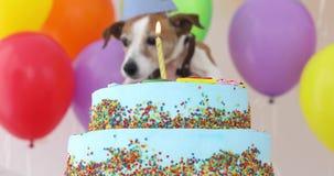 Χαριτωμένο σκυλί με το καπέλο κομμάτων και το κέικ γενεθλίων φιλμ μικρού μήκους