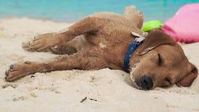 Χαριτωμένο σκυλί που βρίσκεται στην άμμο στην παραλία θάλασσας Αστείος ύπνος σκυλιών και στη θερινή παραλία στο υπόβαθρο θάλασσας φιλμ μικρού μήκους