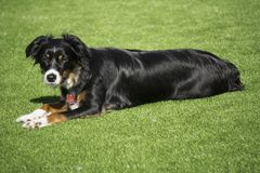 Χαριτωμένο σκυλί που λιάζει το εξωτερικό στο κατώφλι στοκ εικόνες