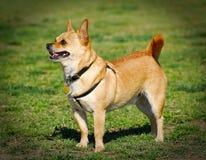 χαριτωμένο σκυλί Στοκ Φωτογραφία