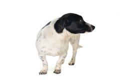 χαριτωμένο σκυλί Στοκ Φωτογραφίες