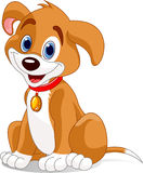 χαριτωμένο σκυλί Στοκ φωτογραφία με δικαίωμα ελεύθερης χρήσης
