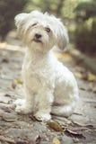 Χαριτωμένο σκυλάκι που στηρίζεται σε ένα πάρκο Στοκ φωτογραφίες με δικαίωμα ελεύθερης χρήσης