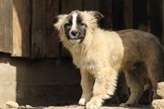 χαριτωμένο σκυλάκι Στοκ Φωτογραφίες