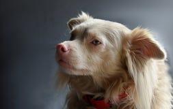 Χαριτωμένο σκυλί διασταύρωσης Στοκ Φωτογραφίες
