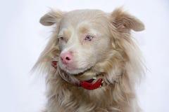 Χαριτωμένο σκυλί διασταύρωσης Στοκ φωτογραφία με δικαίωμα ελεύθερης χρήσης