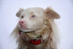 Χαριτωμένο σκυλί διασταύρωσης Στοκ εικόνες με δικαίωμα ελεύθερης χρήσης