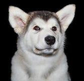 Χαριτωμένο σκυλί κουταβιών Στοκ Εικόνες