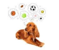 Χαριτωμένο σκυλί με τις σφαίρες στις σκεπτόμενες φυσαλίδες Στοκ εικόνες με δικαίωμα ελεύθερης χρήσης