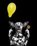 Χαριτωμένο σκυλί με το μπαλόνι και lollipop Στοκ φωτογραφίες με δικαίωμα ελεύθερης χρήσης