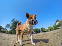 Χαριτωμένο σκυλί με το μπλε ουρανό Στοκ φωτογραφία με δικαίωμα ελεύθερης χρήσης