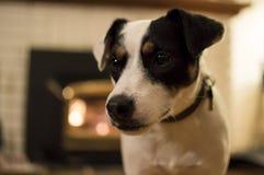 Χαριτωμένο σκυλί μπροστά από την εστία Στοκ εικόνα με δικαίωμα ελεύθερης χρήσης