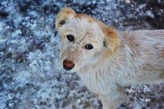 Χαριτωμένο σκυλί οδών Στοκ Εικόνα