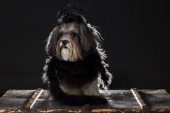 Χαριτωμένο σκυλί που ντύνεται επάνω στο μαύρο εκλεκτής ποιότητας κοστούμι ύφους Στοκ Φωτογραφία