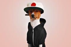 Χαριτωμένο σκυλί που ντύνεται στο καπέλο hoodie και trucker Στοκ φωτογραφία με δικαίωμα ελεύθερης χρήσης