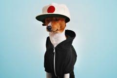 Χαριτωμένο σκυλί που ντύνεται στο καπέλο hoodie και trucker Στοκ Φωτογραφίες