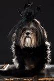 Χαριτωμένο σκυλί που ντύνονται με το μαύρο επενδυμένο με φτερά τρύγος καπέλο με ροδαλό και το πέπλο, και χνουδωτό boa Στοκ Εικόνες
