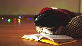 Χαριτωμένο σκυλί που φορά τα γυαλιά και το κόκκινο κοστούμι, που διαβάζουν το βιβλίο στον καναπέ του στη μέση του κενού δωματίου απόθεμα βίντεο