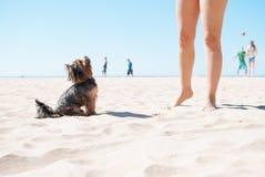 Χαριτωμένο σκυλί στην παραλία Στοκ Εικόνες