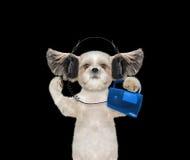 Χαριτωμένο σκυλί το ακουστικό που απομονώνεται με στο Μαύρο Στοκ Φωτογραφίες