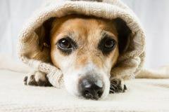 χαριτωμένο σκυλί λυπημένο στοκ εικόνες με δικαίωμα ελεύθερης χρήσης
