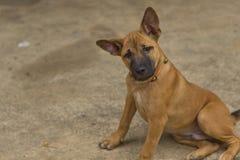 Χαριτωμένο σκυλί 1 στοκ εικόνες με δικαίωμα ελεύθερης χρήσης