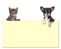 Χαριτωμένο σκυλί chihuahua και μια τιγρέ γάτα μωρών που κρατά ένα κίτρινο έγγραφο Στοκ Φωτογραφία