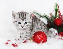 Χαριτωμένο τιγρέ γατάκι με μια κόκκινη σφαίρα Γατάκι Χριστουγέννων Στοκ Εικόνες