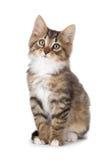 Χαριτωμένο τιγρέ γατάκι σε ένα άσπρο υπόβαθρο. Στοκ Εικόνες