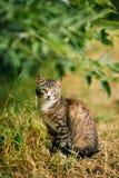 Χαριτωμένο τιγρέ γκρίζο παιχνίδι Pussycat γατακιών γατών στη χλόη υπαίθρια στο καλοκαίρι Στοκ φωτογραφία με δικαίωμα ελεύθερης χρήσης